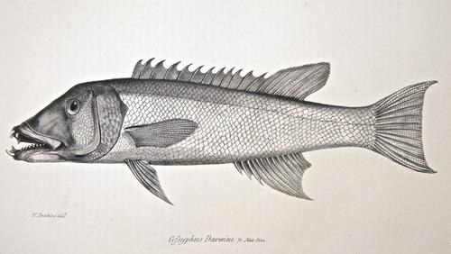 Image of Darwin-F8.3-1838-zzzzzz-det-00100-cf20