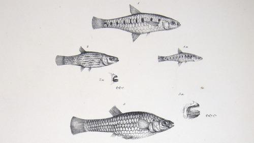 Image of Darwin-F8.3-1838-zzzzzz-det-00114-bf22-1