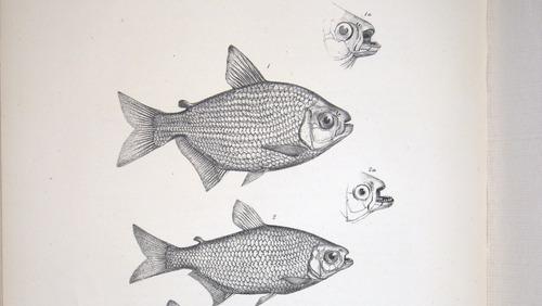 Image of Darwin-F8.3-1838-zzzzzz-det-00122-bf23-1