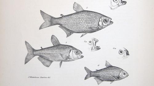 Image of Darwin-F8.3-1838-zzzzzz-det-00122-bf23-2