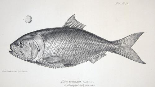 Image of Darwin-F8.3-1838-zzzzzz-det-00134-bf25
