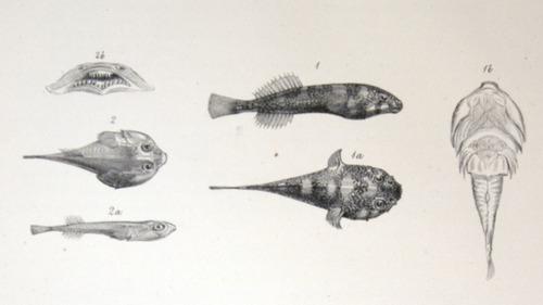 Image of Darwin-F8.3-1838-zzzzzz-det-00140-yf27-1