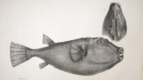 Image of Darwin-F8.3-1838-zzzzzz-det-00154-cf28