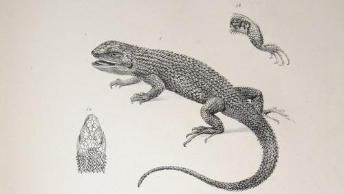 Image of Darwin-F8.3-1838-zzzzzzz-det-b00004-yf01-1