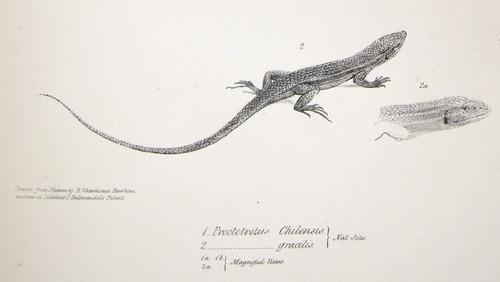 Image of Darwin-F8.3-1838-zzzzzzz-det-b00004-yf01-2