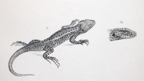 Image of Darwin-F8.3-1838-zzzzzzz-det-b00004-yf02