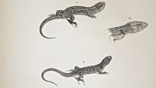 Image of Darwin-F8.3-1838-zzzzzzz-det-b00008-yf04