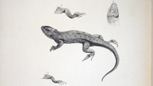 Image of Darwin-F8.3-1838-zzzzzzz-det-b00010-yf05