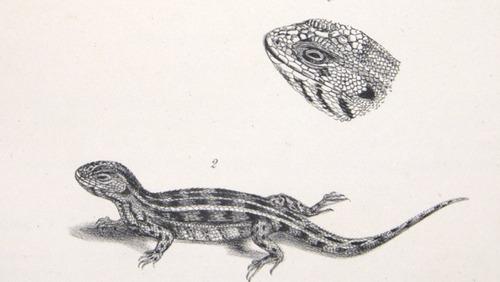 Image of Darwin-F8.3-1838-zzzzzzz-det-b00012-yf06-2