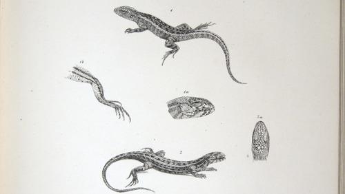 Image of Darwin-F8.3-1838-zzzzzzz-det-b00014-ayf07