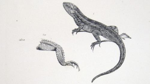 Image of Darwin-F8.3-1838-zzzzzzz-det-b00014-bbf08-1