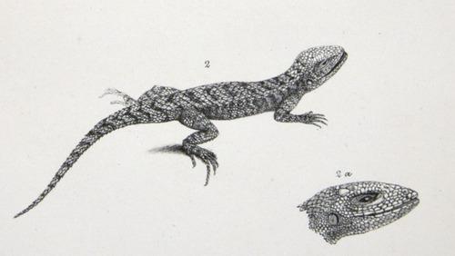 Image of Darwin-F8.3-1838-zzzzzzz-det-b00014-bbf08-3
