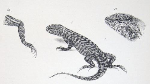 Image of Darwin-F8.3-1838-zzzzzzz-det-b00016-yf09-1