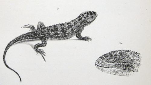 Image of Darwin-F8.3-1838-zzzzzzz-det-b00016-yf09-2