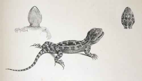 Image of Darwin-F8.3-1838-zzzzzzz-det-b00020-ayf10