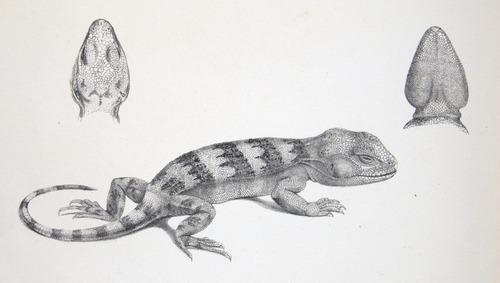 Image of Darwin-F8.3-1838-zzzzzzz-det-b00020-bbf11-1