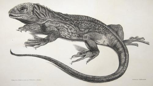 Image of Darwin-F8.3-1838-zzzzzzz-det-b00022-yf12