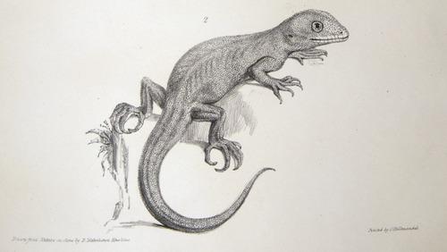 Image of Darwin-F8.3-1838-zzzzzzz-det-b00024-yf13