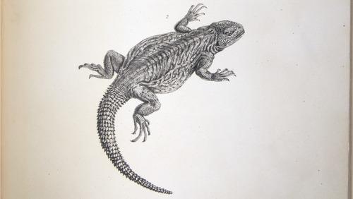 Image of Darwin-F8.3-1838-zzzzzzz-det-b00026-yf14-2