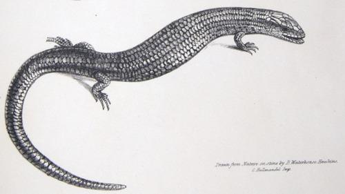 Image of Darwin-F8.3-1838-zzzzzzz-det-b00028-yf15