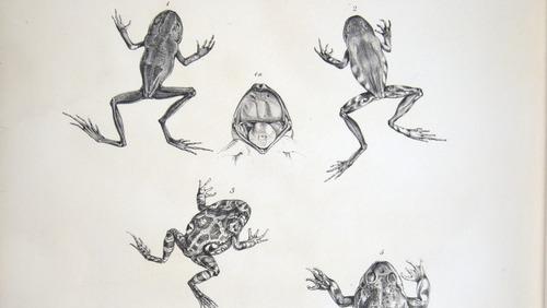 Image of Darwin-F8.3-1838-zzzzzzz-det-b00034-bf17