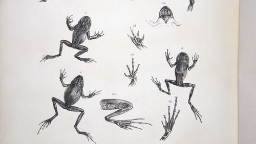 Image of Darwin-F8.3-1838-zzzzzzz-det-b00038-bf18