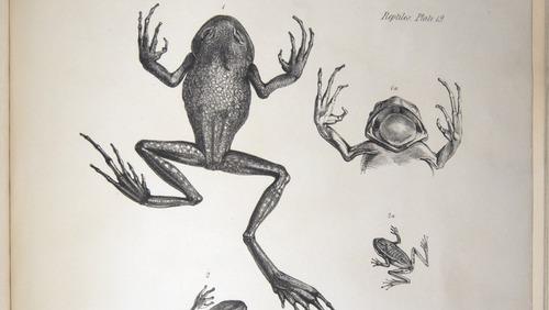 Image of Darwin-F8.3-1838-zzzzzzz-det-b00044-bf19
