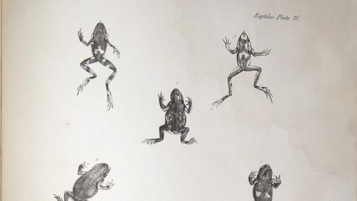 Image of Darwin-F8.3-1838-zzzzzzz-det-b00048-bf20-1
