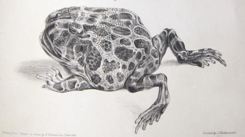 Image of Darwin-F8.3-1838-zzzzzzz-det-b00048-bf20-2