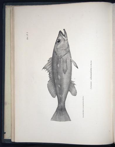 Image of Darwin-F8.3-1838-00002-bf02
