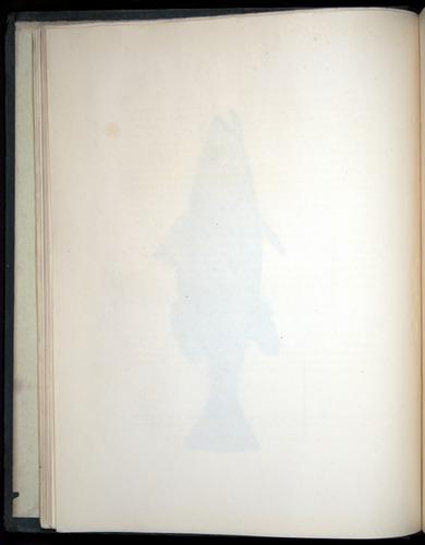Image of Darwin-F8.3-1838-00002-zf02