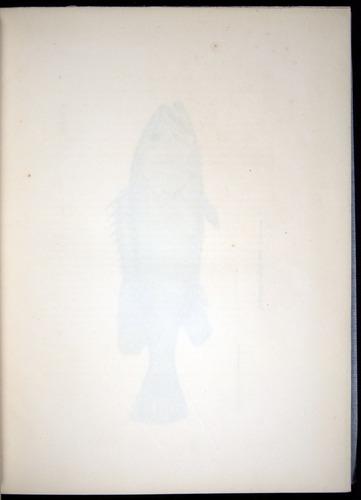 Image of Darwin-F8.3-1838-00008-aaf03