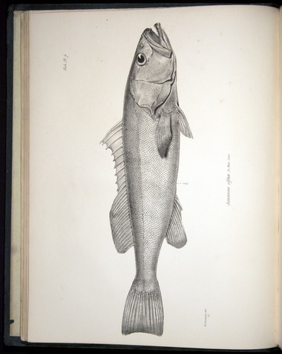 Image of Darwin-F8.3-1838-00008-bbf04