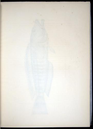 Image of Darwin-F8.3-1838-00020-af05