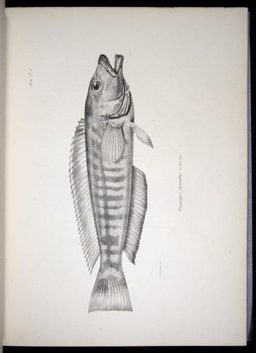 Image of Darwin-F8.3-1838-00020-yf05