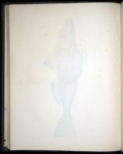 Image of Darwin-F8.3-1838-00028-zf06