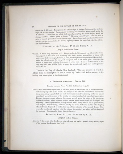 Image of Darwin-F8.3-1838-00028