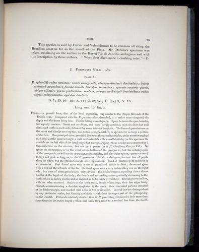 Image of Darwin-F8.3-1838-00029