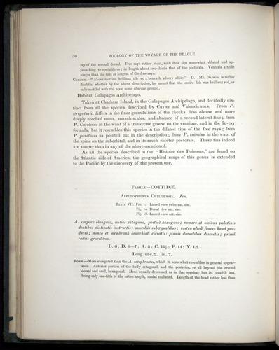 Image of Darwin-F8.3-1838-00030