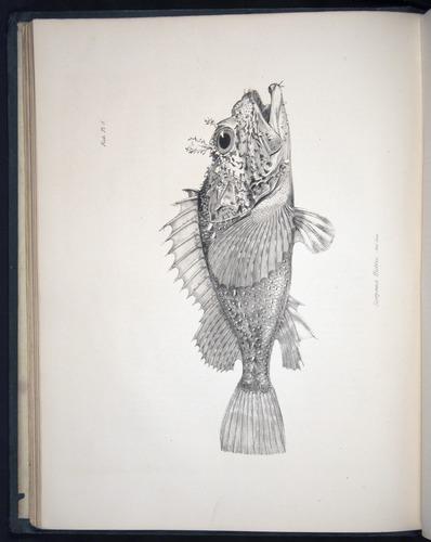 Image of Darwin-F8.3-1838-00034-bf08
