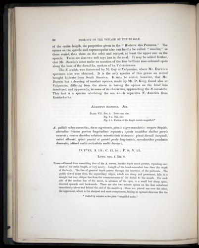 Image of Darwin-F8.3-1838-00038