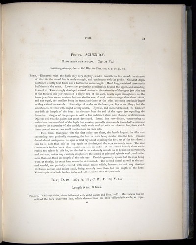 Image of Darwin-F8.3-1838-00041