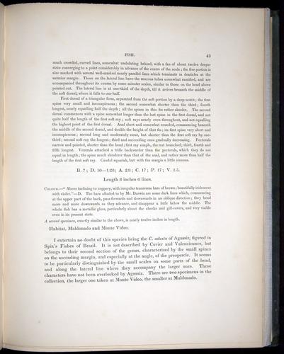Image of Darwin-F8.3-1838-00043