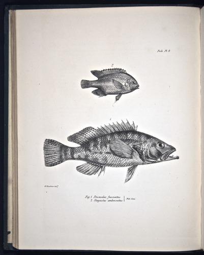 Image of Darwin-F8.3-1838-00046-bf09