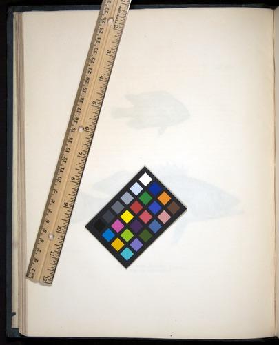 Image of Darwin-F8.3-1838-00046-zf09