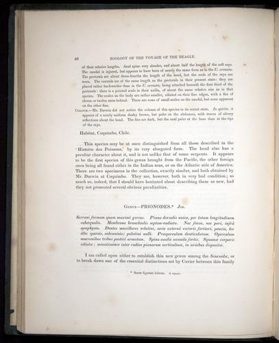 Image of Darwin-F8.3-1838-00046