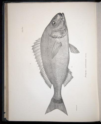 Image of Darwin-F8.3-1838-00048-bf10