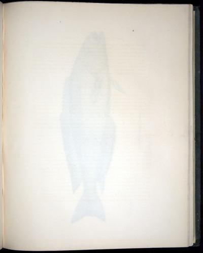 Image of Darwin-F8.3-1838-00052-af11