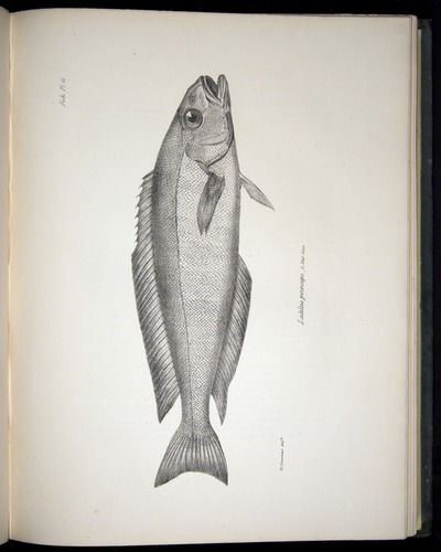 Image of Darwin-F8.3-1838-00052-cf11