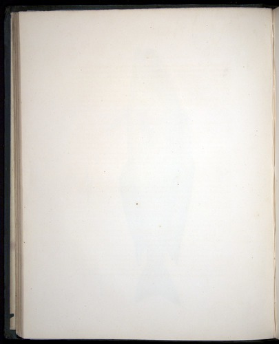 Image of Darwin-F8.3-1838-00052-zf11